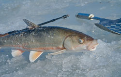 Winter fishing 11 Royalty Free Stock Photos