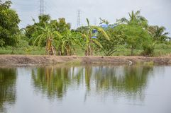 Fish pond in country Thailand. Close up fish pond in country Thailand Stock Photo