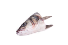 Close up of fish's head. Royalty Free Stock Photo