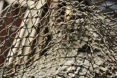 Fishing net. Close up of a fishing net stock images