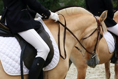 Close up of a fjord horse on a dressage event Royalty Free Stock Image