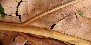 Photo Close Up Flat Lay Dry Weathered Brown Leaf for element design background royalty free stock photos