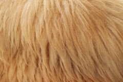 Close up fleece. Detail of Close up fleece Royalty Free Stock Photo