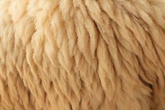 Close up fleece. Detail of Close up fleece Royalty Free Stock Image