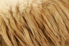 Close up fleece. Detail of Close up fleece Stock Photography