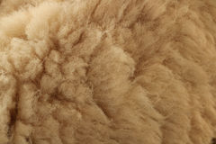 Close up fleece. Detail of Close up fleece Royalty Free Stock Images