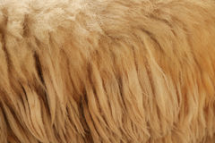 Close up fleece. Detail of Close up fleece Royalty Free Stock Photos