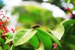 Close up of flies on the leaves stock photo