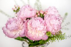 Pink peonies composition Stock Photo