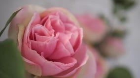 Close-up Flores cor-de-rosa delicadas, cor-de-rosa no jardim 4K mo lento video estoque