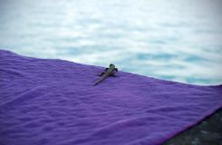 Curious lizard on the water side looking royalty free stock photos