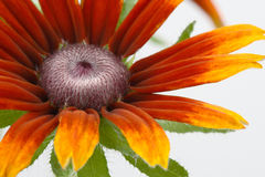Close up of flower Stock Photography