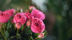 Close-up, Flower bouquet in the rays of light, rotation, the floral composition consists of pink Roses pion-shaped. Divine beauty. in the background a lot of stock video