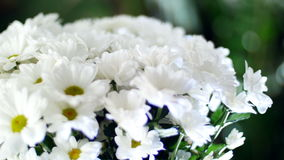 Close-up, Flower bouquet in the rays of light, rotation, the floral composition consists of white Chrysanthemum. Chamomile bacardi. In the background a lot of stock video footage