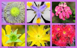 Close-up Flower Collage Stock Images