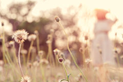 Close up flower in field with blur young woman Stock Photography