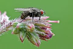 Fly on flower blossom. A close up of a flower on a flower blossom Stock Photos