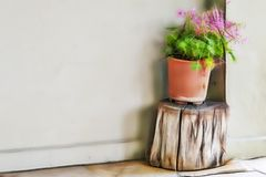 Flower in flowerpot on tree trunk near the wall. Close up flower in flowerpot on tree trunk near the wall royalty free stock image