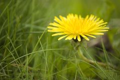 Close up of  flower with  green grass. On the background stock photo