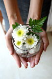 Close up flower in hand. With a beautiful manicure Stock Images