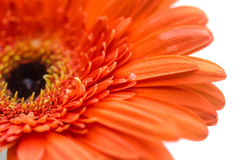 Close-up of flower Stock Images