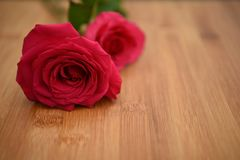 Close up flower photography image of fresh red roses on a natural rustic wood background with blur background for Valentines Day. Fresh real red rose flowers and Royalty Free Stock Image