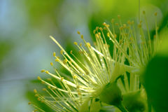 Close up of flower on the tree under the rain. Royalty Free Stock Photos
