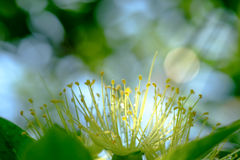 Close up of flower on the tree under the rain. Royalty Free Stock Images