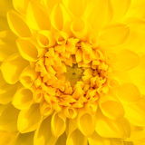 Close up of flower Royalty Free Stock Images