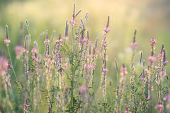 Close-up of flowering meadow Stock Photo