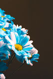 Close up Flowers background. Chrysanthemums bouquet. Mother`s and Womens Day. Copy space. Blue color Stock Photo