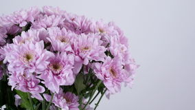 Close-up, Flowers, bouquet, rotation on white background, floral composition consists of purple Chrysanthemum saba. stock video