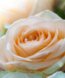 Close up flowers Royalty Free Stock Images