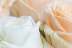 Close up flowers Stock Photography