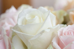 Close up flowers Royalty Free Stock Photography
