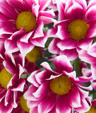 Close up flowers Royalty Free Stock Image