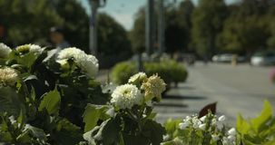 Close up of flowers at Norrköping central station with blurred people in the background. stock video