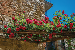 Close-up of flowers on top wooden frame and blue sky at Colle di Val d`Elsa. A graceful village with its historic center preserved and known by its crystal Royalty Free Stock Photo
