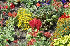 Close up Flowersbeds from Jardin du Luxembourg from Paris in France. Close up Flowerbeds from Jardin du Luxembourg from Paris in France on july 18th 2015 stock photography