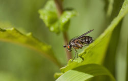 Close up of a fly Stock Photos