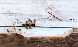 Close up of flying beees stock photos