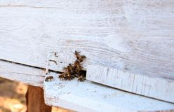 Close up of flying beees stock photography