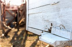 Close up of flying beees royalty free stock images