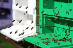 Close up of flying honey bees in front of their hive royalty free stock images