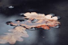 Close up foliage on frozen water stock images
