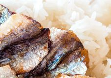 Sticky rice and fried sun-dried fish Stock Images