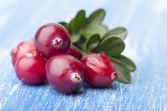 Close-up of forest cranberries Stock Photography