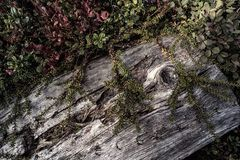 Nature close up in forest Royalty Free Stock Photography