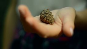 Pinecone in the hand of the girl. Close up of forest pinecone in the hand of the girl stock video footage