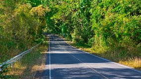 Close up forest road. Forest road. Landscape in thailand Royalty Free Stock Images